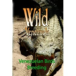 Wild Venezuela Venezuelan Birds Breeding