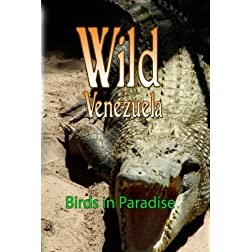Wild Venezuela Birds in Paradise