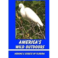 Herons & Egrets of Florida
