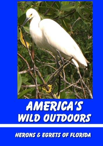 Herons & Egrets of Florida