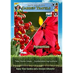 Garden Travels Holly Poinsettias