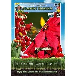 Garden Travels Holly Poinsettias
