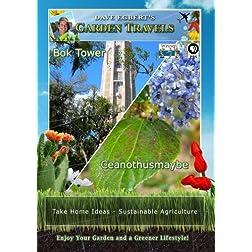 Garden Travels Bok Tower Ceanothusmaybe