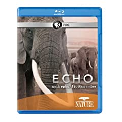 Echo: An Elephant to Remember (Nature) [Blu-ray]