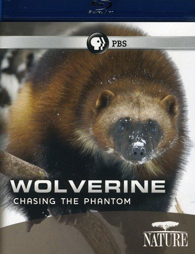 Nature: Wolverine: Chasing the Phantom [Blu-ray]