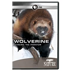 Nature: Wolverine: Chasing the Phantom