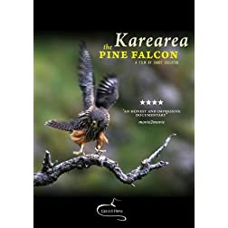 Karearea: the pine falcon