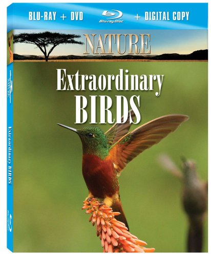 Nature: Extraordinary Birds [Blu-ray]