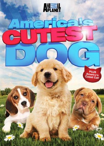 America's Cutest Dog