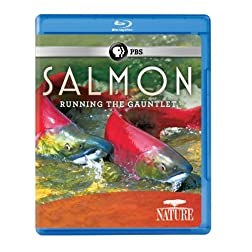 Nature: Salmon [Blu-ray]