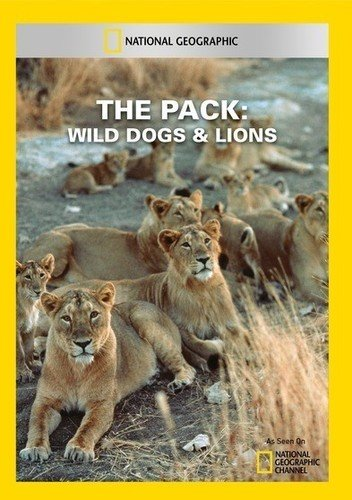 The Pack: Wild Dogs & Lions