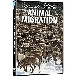 Ultimate Wildlife: Animal Migration