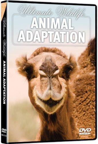 Ultimate Wildlife: Animal Adaptation