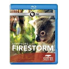 Nature: Survivors of the Firestorm [Blu-ray]