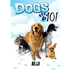 Dogs 101