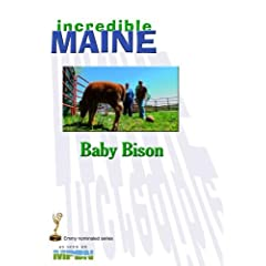 iM-405 Baby Bison
