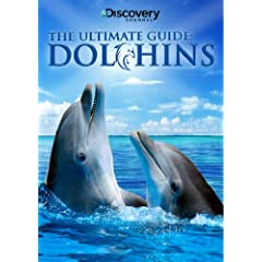 Ultimate Guide: Dolphins
