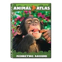Animal Atlas: Monkeying Around