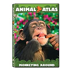 Animal Atlas: Monkeying Around