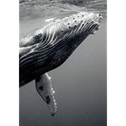 I Photograph Whales Up Close