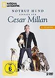 Notruf Hund - Einsatz für Cesar Millan: Staffel 2 (2 DVDs)